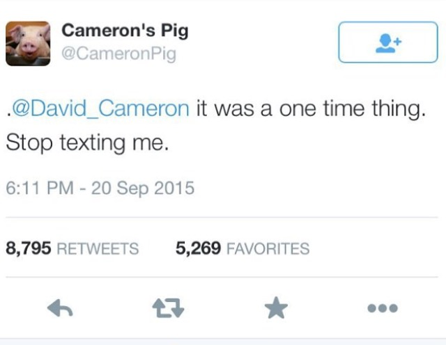 @CameronPig on twitter: https://twitter.com/cameronpig (at time of writing has ammassed 13.8k followers in less than a day)