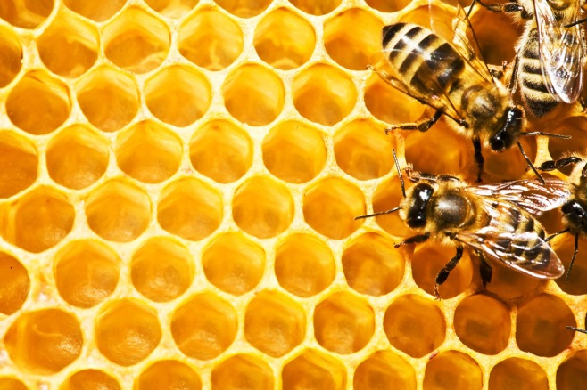 Close up view of the working bees on honeycells. Source: pelaton.co.uk