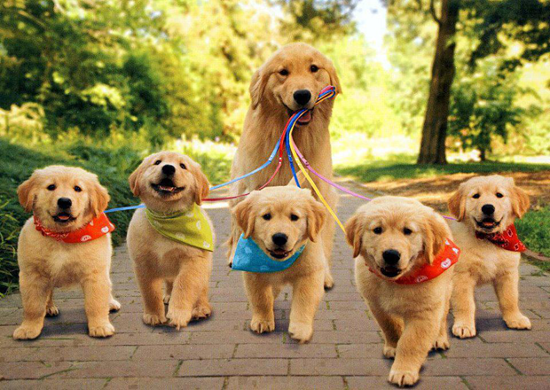 cute-dogs-pictures-2-1-10-4-5-6-2-1-2-3-4-5